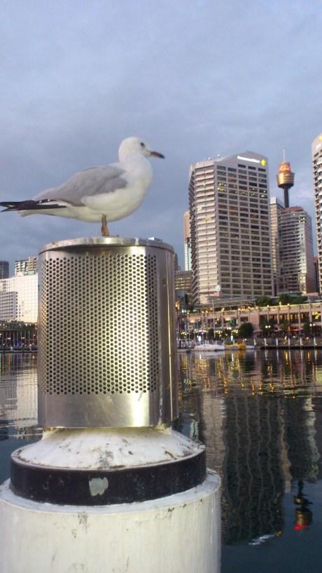 Gull on Watch