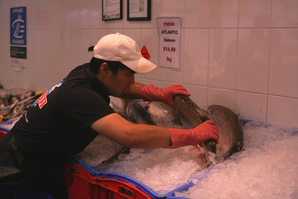 Sydney Christmas 2012 - Fish Markets #4