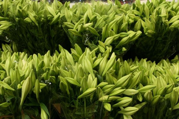 Prahran Markets #3