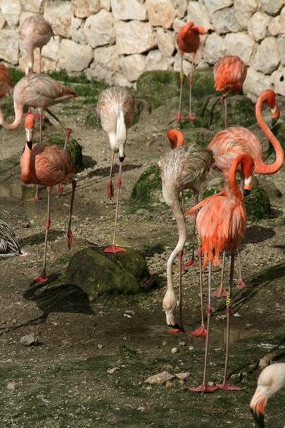 Flamingos at Xcaret