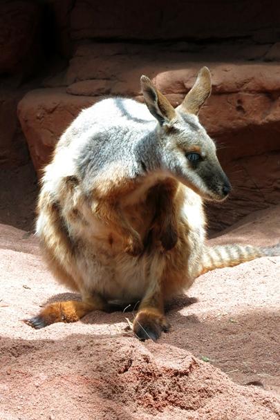 Wildlife Sydney Zoo - #4
