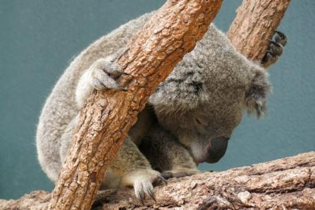 Wildlife Sydney Zoo - #6