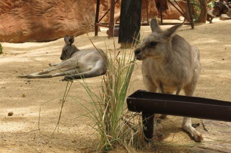 Wildlife Sydney Zoo - #10
