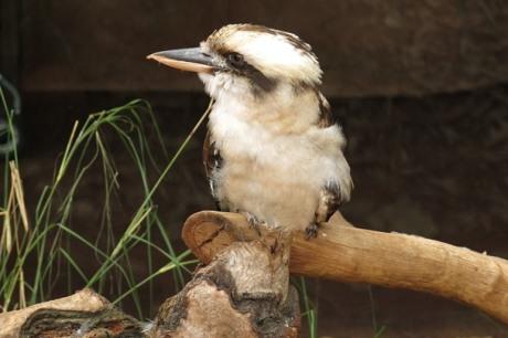 Wildlife Sydney Zoo - #11