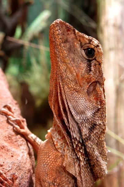 Wildlife Sydney Zoo - #12