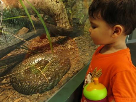 Pok at the Wildlife Sydney Zoo - #1