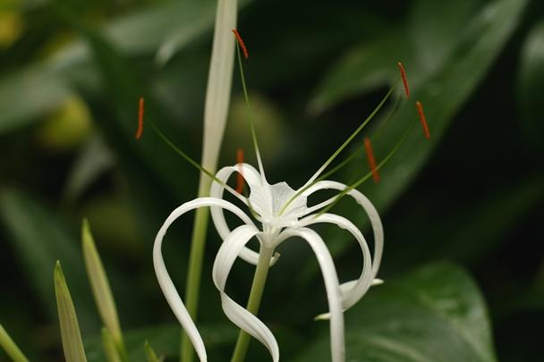 Singapore Botanic Gardens #03