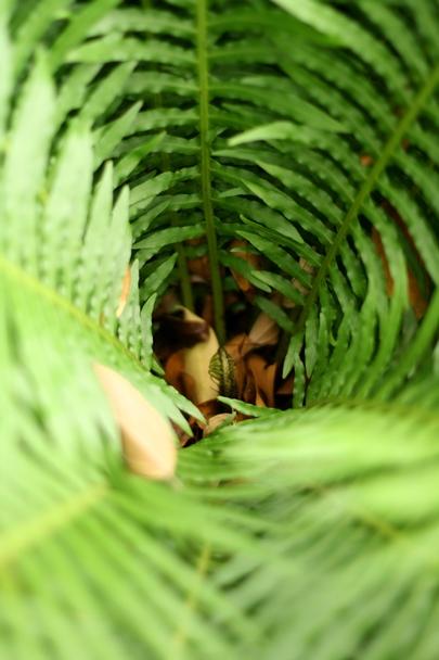 Singapore Botanic Gardens #11