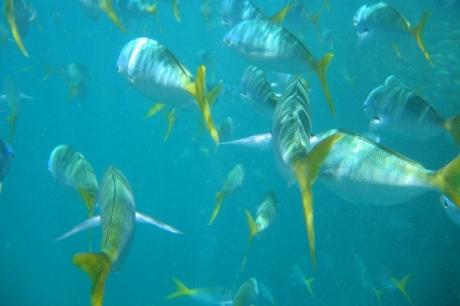 Great Barrier Reef - Underwater