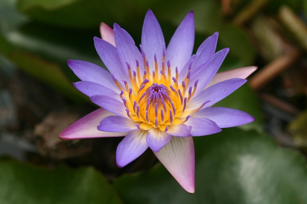 Enchanting_Floral_Gardens-06