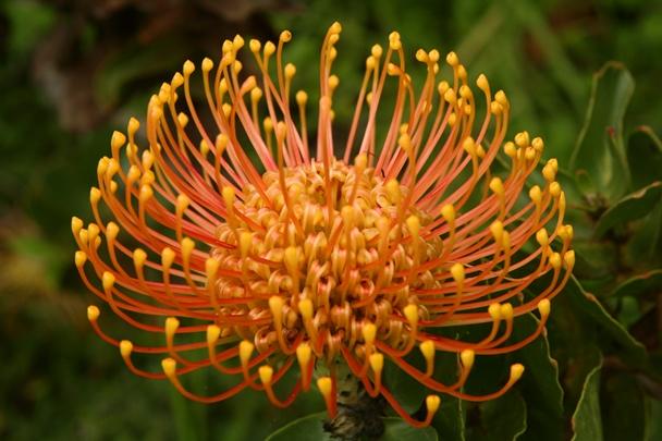 Enchanting_Floral_Gardens-09