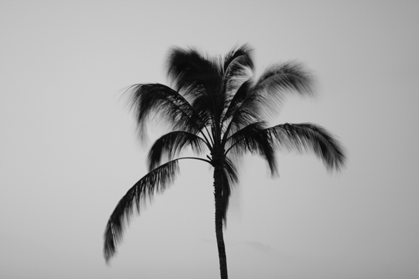Hawaii_Island-01