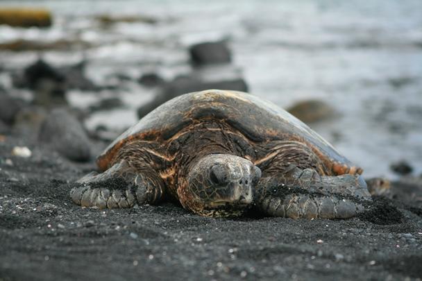 Hawaii_Island-08
