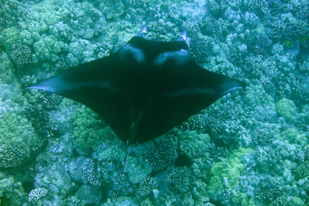 Hawaii_Island_Dive_06