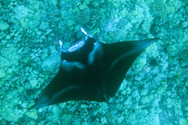 Hawaii_Island_Dive_07