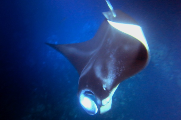 Hawaii_Island_Dive_10