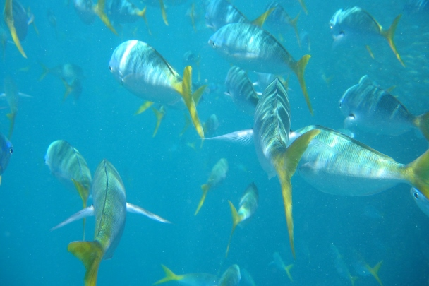 Great_Barrier_Reef0037ps