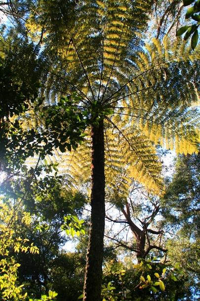 Illawarra_Treetops_0064ps