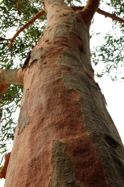 Sydney_Spring_2013_0016