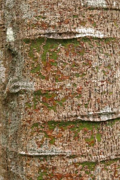 Trees_Central_Coast_0002