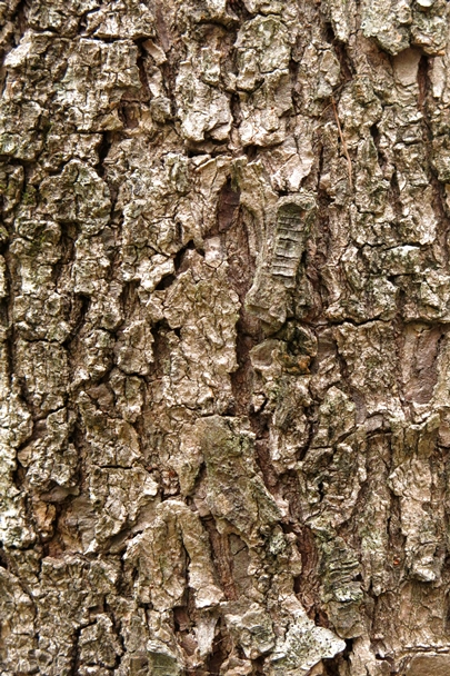 Trees_Central_Coast_0003