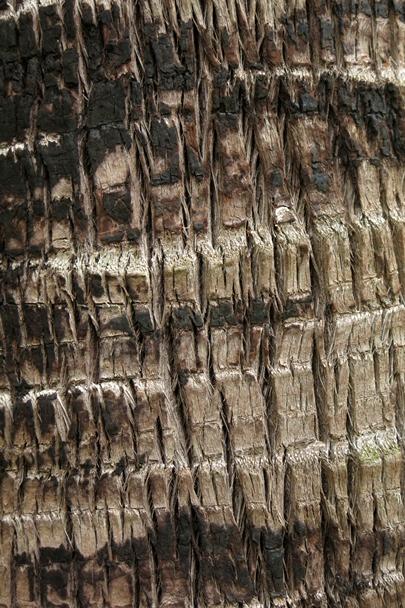 Trees_Central_Coast_0004