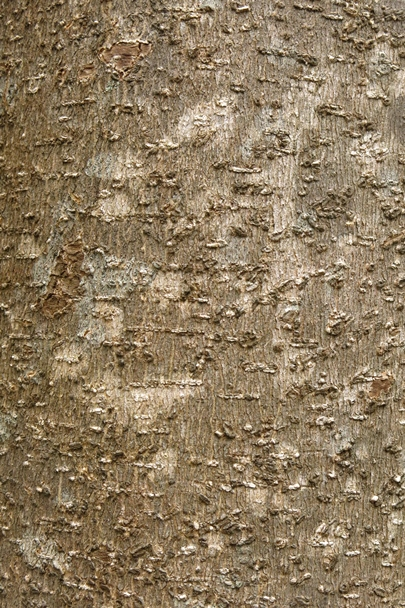 Trees_Central_Coast_0005