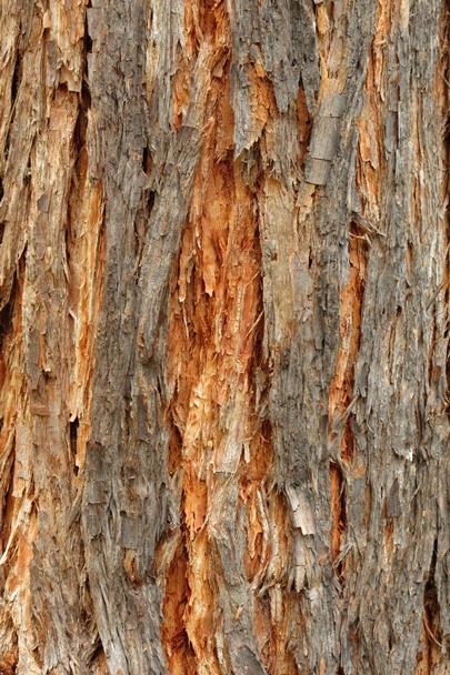 Trees_Central_Coast_0006