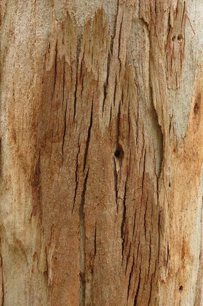 Trees_Central_Coast_0008