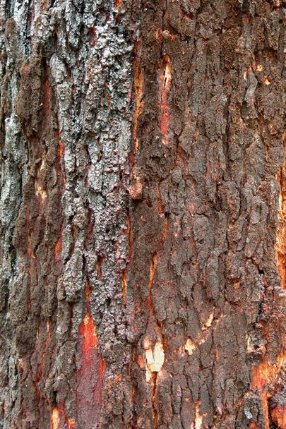 Trees_Central_Coast_0009