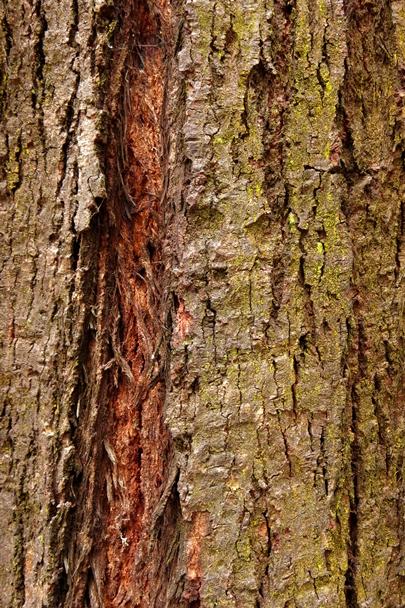 Trees_Central_Coast_0010
