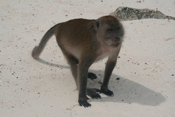 Andaman_Islands_0295