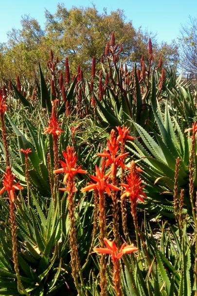Spring_Botanic_Gardens_0263