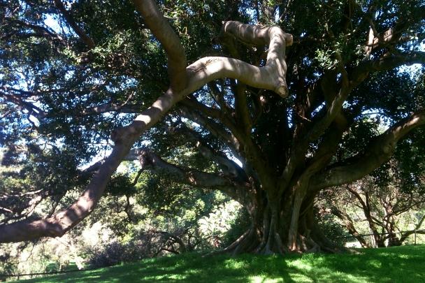 Spring_Botanic_Gardens_0269