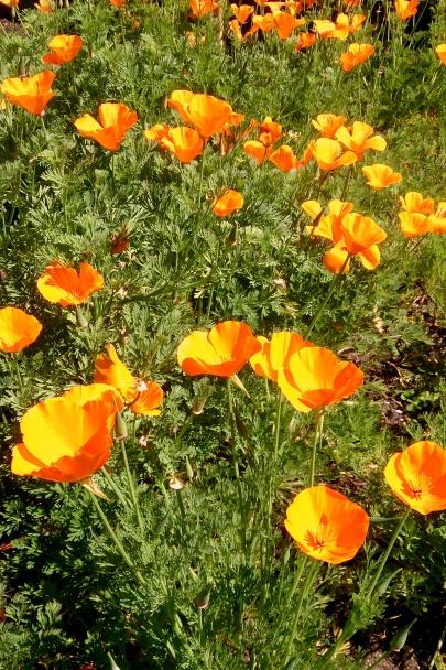 Spring_Botanic_Gardens_0276