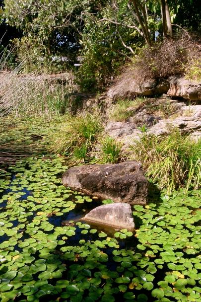 Spring_Botanic_Gardens_0288