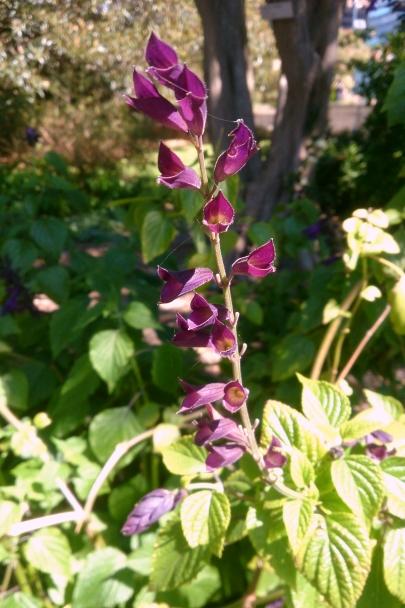 Spring_Botanic_Gardens_0294