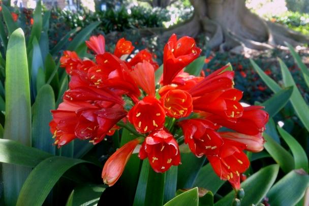 Spring_Botanic_Gardens_0299