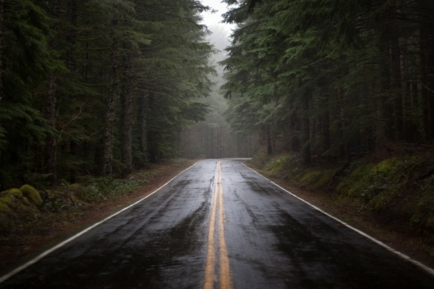 nature_trees_forest_wet_roads